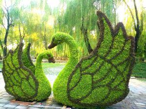 天鹅仿真绿雕
