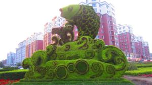 鲤鱼五色草绿雕设计